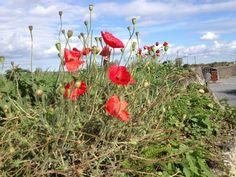 Dodengang bij de Ijzer, mét Poppies