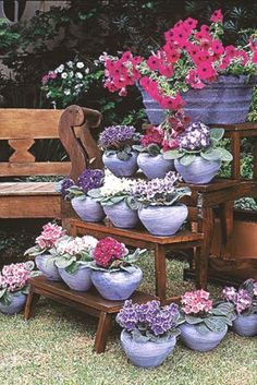 Good display of a garden collection (african violets)