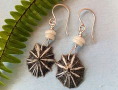Opihi Shell Earrings Hawaii Limpet & Puka Shell by KauaiSeaShells, $10.50
