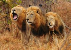 Sightings at Inyati | November 2013 | African Safaris