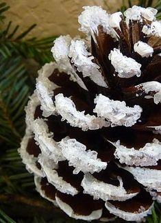 vánoční dekorace, dekorace ze šišek, tvoříme s dětmi, šiškový věnec, zasněžené šišky, bílá šiška