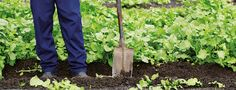 Start your own food garden- OZCF is featured.