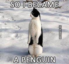 Картинки по запросу animals and snow meme