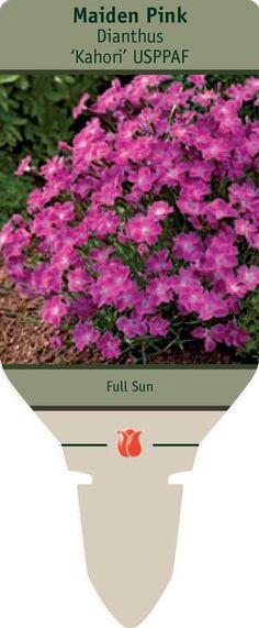1000 Images About Garden Journal Full Sun Part Sun On