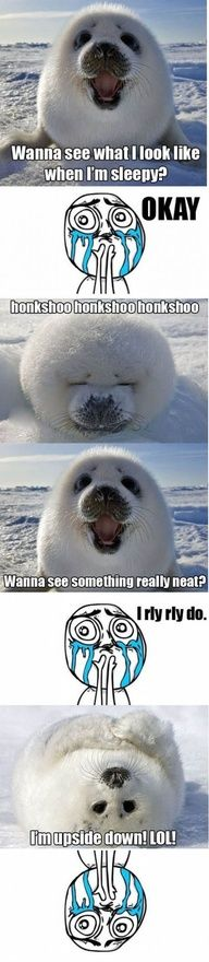 AND I LOVE SEALS :)