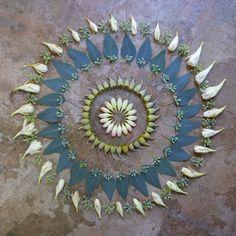 tuberose and eucalyptus Flower Circle, Flower Mandala, Flower Petals, Flower Art, Shape And Form, Land Art, Beauty Art, Sacred Geometry, How To Take Photos
