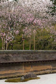 Japaninfo added 24 new photos to the album: Ryoan-jiสวนหิน Karesanzui +ซากุระ@ วัด Ryoan-ji/Kyoto — at 龍安寺.