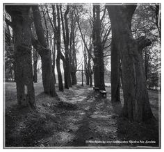 #church #destroyed #heritage #history #cemetery #nature #tree #saint #santa #czechia #cesko #česko #ceskarepublika #ujezd #2017 #myphoto #today #visitCzechia #vylet #cestovani