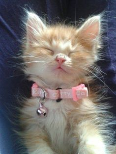 I wish my cats didn't mind collars! They look so stink in cute in them!