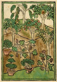 "Five cuttings (the spheres and the elements -two impressions-, fishes and crustaceans, insects, trees) from Cunrat von Megenberg, ""Buch der Natur"", printed by J. Bämler, Augsburg.  1475, 1478, 1481  Woodcut with hand-colouring"