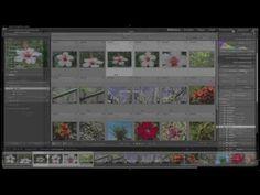 Adobe Photoshop Lightroom: 14 - Añadir © Copyright a Metadatos