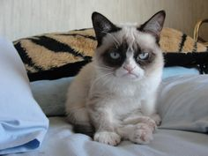 Funny Cat Meme Generator : Grumpy cat pictures with captions smiled once grumpy cat meme