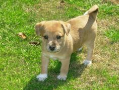 cute mixed breed dog pictures