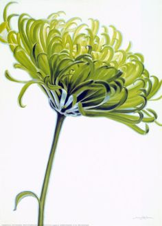 Green Chrysanthemum