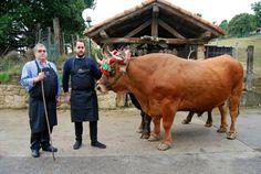 Cow, Animals, Drink, World, Hotels, Trekking, Tourism, Viajes, Animales