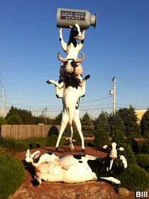 Sault Ste. Marie, Ontario, Canada: Three Goofy Cows in a Pile Three cows: one lounging on the ground like a Hollywood startlet, and one standing on its hind legs with aother perched on its shoulders holding aloft a milk can. It's an elaborate statue-sign for a dairy.