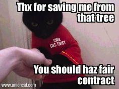 Automatically the greatest Tumblr ever #classwarkitteh for #faircontract! #1u