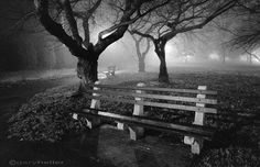 Park Benches Black and White Photography by garyhellerphotograph, $29.00
