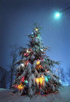 """""""O natal nasce no coração e desenvolve-se no espírito através das atitudes que…"""