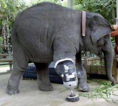 <3 the reason I am studying veterinary medicine..