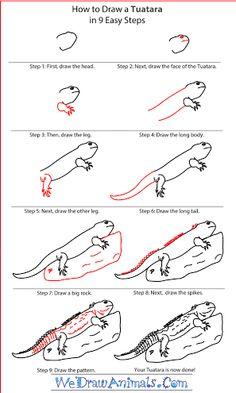 Tuatara free coloring pages Tuatara Pinterest Reptiles