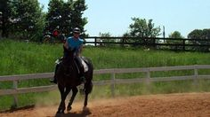 Trots. Contact/on the aids/on the bit. Training level.  Dressage trai...
