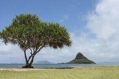 #Chinaman's #Hat #Oahu, #Hawaii. Starting at $27. #photography #nature #photog #travel #nikon #picsart #photo #pod #tree #trees #chinamans #green #sky #island