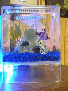 G4 Cube Fishtank by brchickery, via Flickr