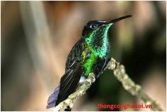 Biến đổi khí hậu làm 2500 loài chim có nguy cơ tuyệt chủng