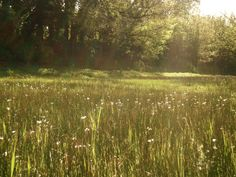 Sunny meadow in the English countryside.