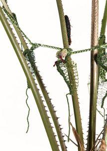 #CairnsBirdwingButterfly #Caterpillar #ButterflyRainforest #wirecrochet #artinstallation #studiodeanna #fiberart #CairnsBotanicGarden #crochet #fibreart #coloredcopperwire #firemtngems #crochetwire