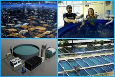 How to Start a Fish Farming Business... Fish farming or pisciculture is the principal form of aquaculture, while other methods may fall under agriculture. Fish farming involves raising fish commercially in tanks or enclosures, usually for food.