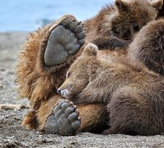FullyCoolPix: Big Bears and his family