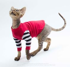 Cat Clothes Sphynx Cat Clothing Strange Stripes with Cuffs.  Short/long sleeves. by SimplySphynx #etsy #etsyseller #simplysphynx #sphynx #sphynxcat #sphynx #catclothes #sphynxcatclothes
