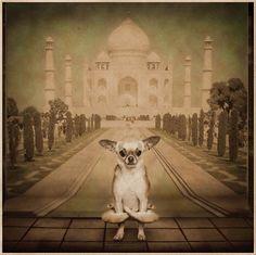Yoga Dogs - mashKULTURE