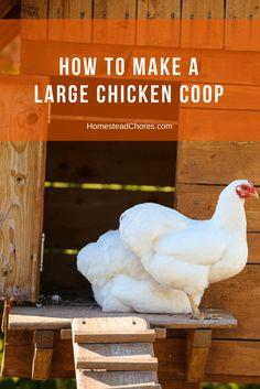 large-chicken-coop-pin
