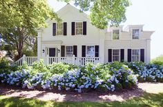 add charm to an otherwise flat front exterior with an abundance of hydrangea
