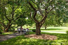Pintando en el precioso Jardín Botánico de Brooklyn @brooklynbotanic #nuevayork #brooklyn