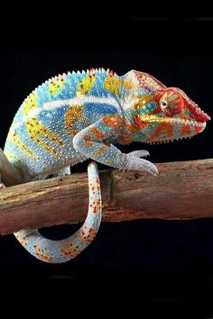 Wow ... look at the colors!  :)