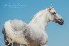 PRE-Stallion.jpg (960×643)