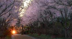 Primavera y Feng Shui - Piensa en Reiki