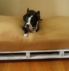 Make a bed for your puppy from a freight pallet!