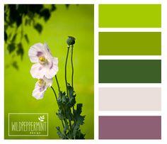Frühlingsgrün, Farbpalette Grasgrün, grüntöne, farbinspiration / © wildpeppermint-design.de