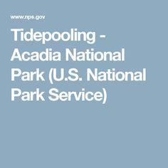 Tidepooling - Acadia National Park (U.S. National Park Service)