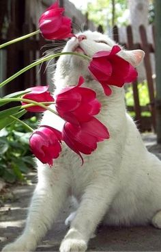 ♥ What's the garden without a cat or two lurking about, eating flowers or stretching in the sun.
