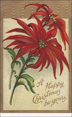 A Happy Christmas be yours, Poinsettia Flowers, Gold Border, 00-10s Item# SCVIEW453805 (290070346)