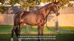 Le cheval est de tous les animaux, celui qui avec une grande taille, a le plus de proportion et d'élégance dans les parties de son corps.