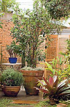 Também conhecida como cereja-da-mata-atlântica, a brasileiríssima grumixama tem crescimento rápido e pode atingir até 15