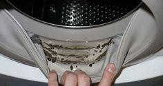 Cómo quitar el moho peligroso y olores horribles de su lavadora con tan sólo 2 ingredientes