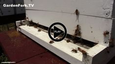 Beginning Beekeeping video series, this time the video is about ventilating the beehive.